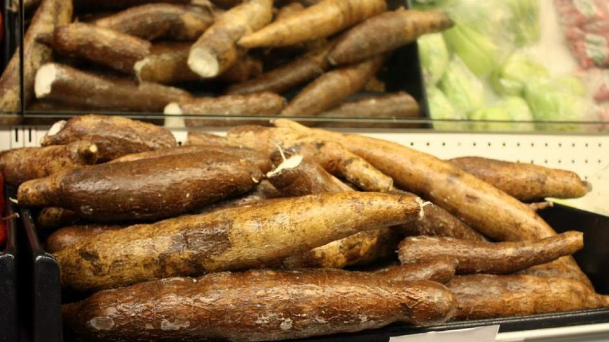¿Que es la mandioca? Propiedades y beneficios para la salud