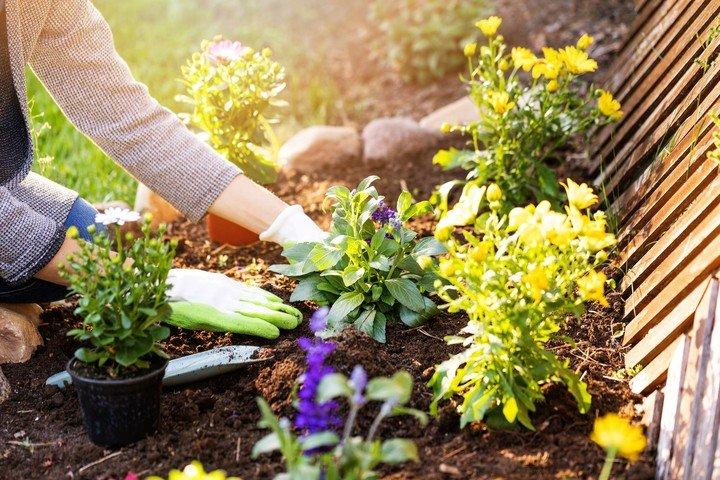 Cuarentena: la jardineria puede ayudar a elevar el nivel de bienestar