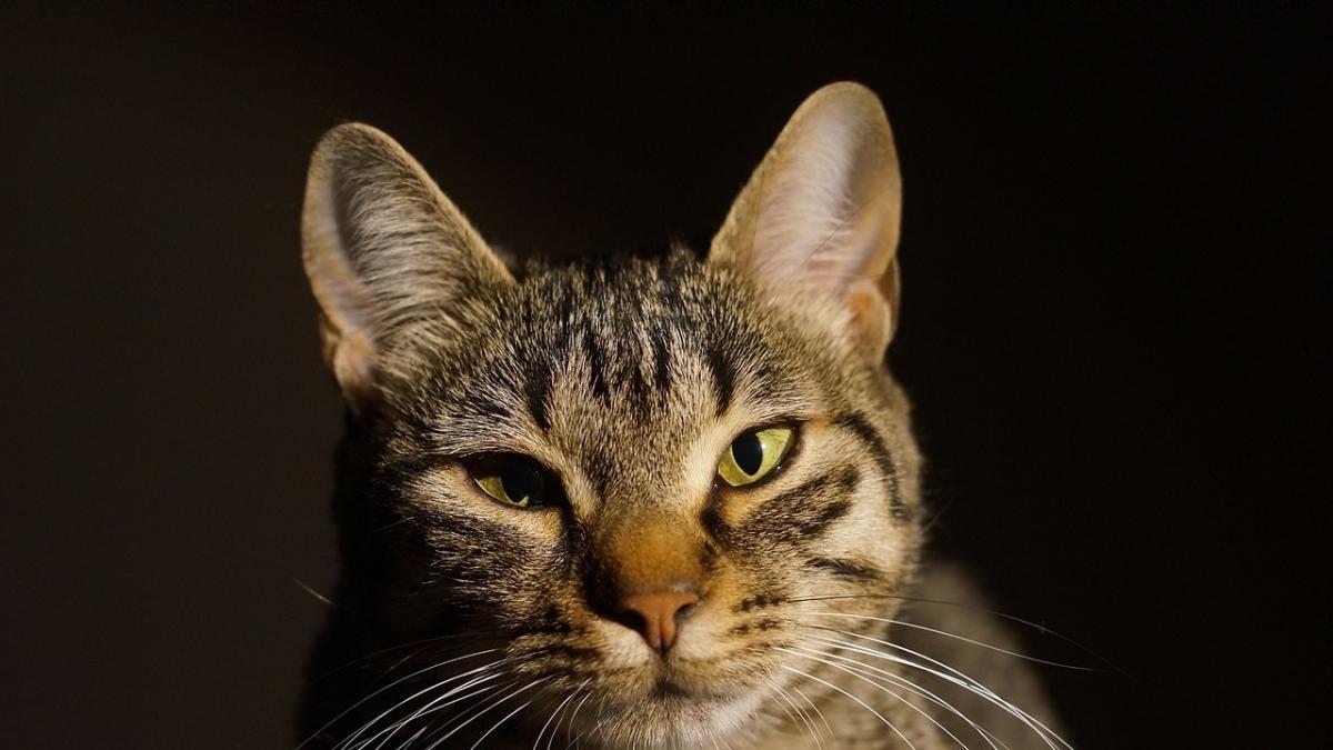 ¿Por que a los gatos les gusta tanto meterse dentro de cajas? Hay una explicacion cientifica