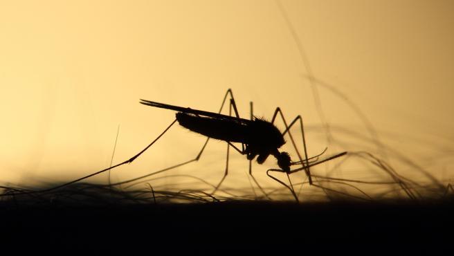 Remedios caseros para las picaduras de mosquitos