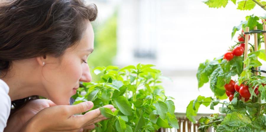 Las plantas proporcionan beneficios a la salud física y mejoran el estado de ánimo