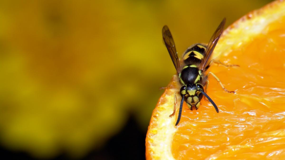 Como ahuyentar abejas