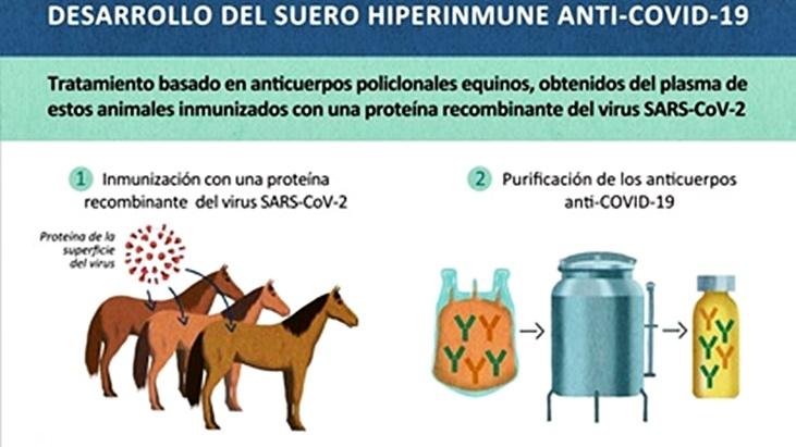 Coronavirus: en busqueda de una cura, cientificos argentinos elaboraron un suero hiperinmune a partir de anticuerpos de caballos