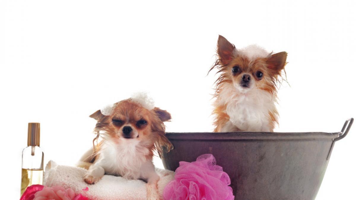 Remedios caseros para quitar las pulgas a un perro con ingredientes que todos tenemos
