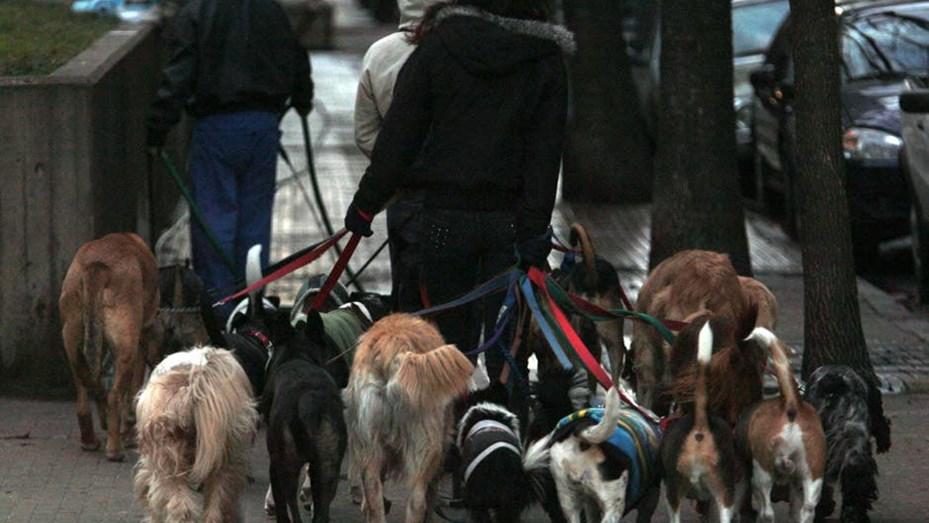 Volvieron los paseadores de perros, los lavaderos de autos y los locales de ropa y zapaterias barriales en Capital
