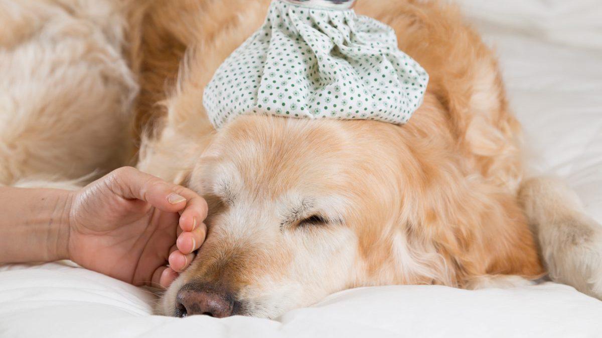 Los golpes de calor en perros y gatos pueden ser mortales: como prevenirlos, identificarlos y tratarlos