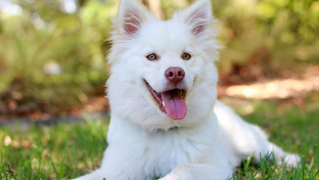 Piometra en perras: ¿por que se produce y como evitarla?