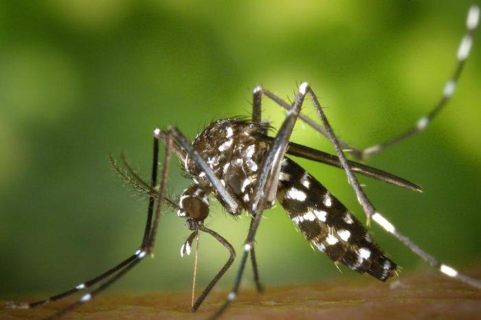 Estas son las pautas para identificar los cinco bichos peligrosos mas comunes y sus picaduras, segun la OCU