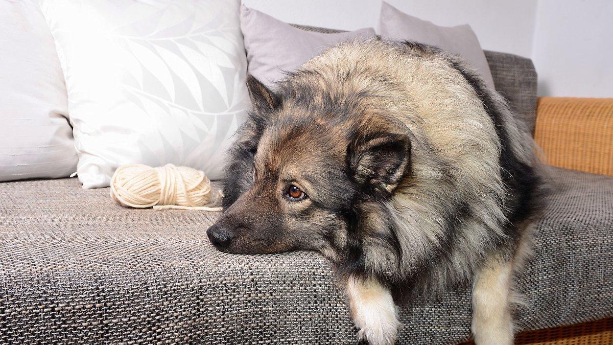 Consejos para que los animales superen la ansiedad por tener a sus dueños mas tiempo fuera de casa