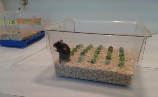 Diseñan una molecula capaz de retrasar el parkinson en ratones y monos