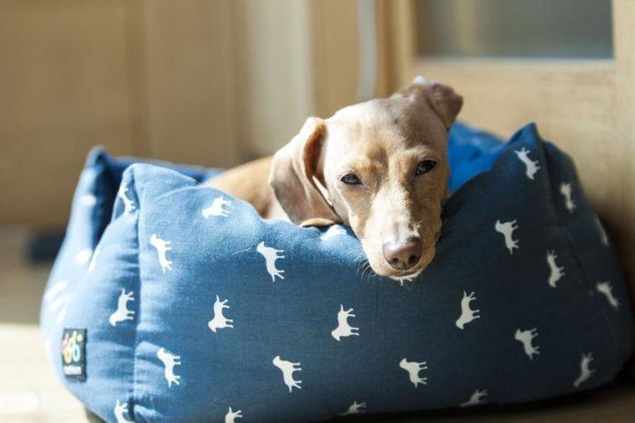 Por que tu perro araña su cama antes de dormir