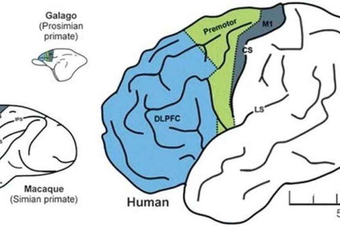 Esto es lo que ocurre en el cerebro de las personas que llevan la mascarilla en la barbilla