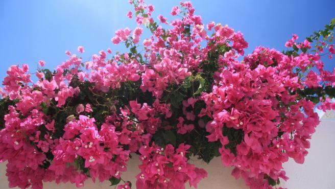¿Es posible recuperar una planta que se ha estropeado durante las vacaciones?