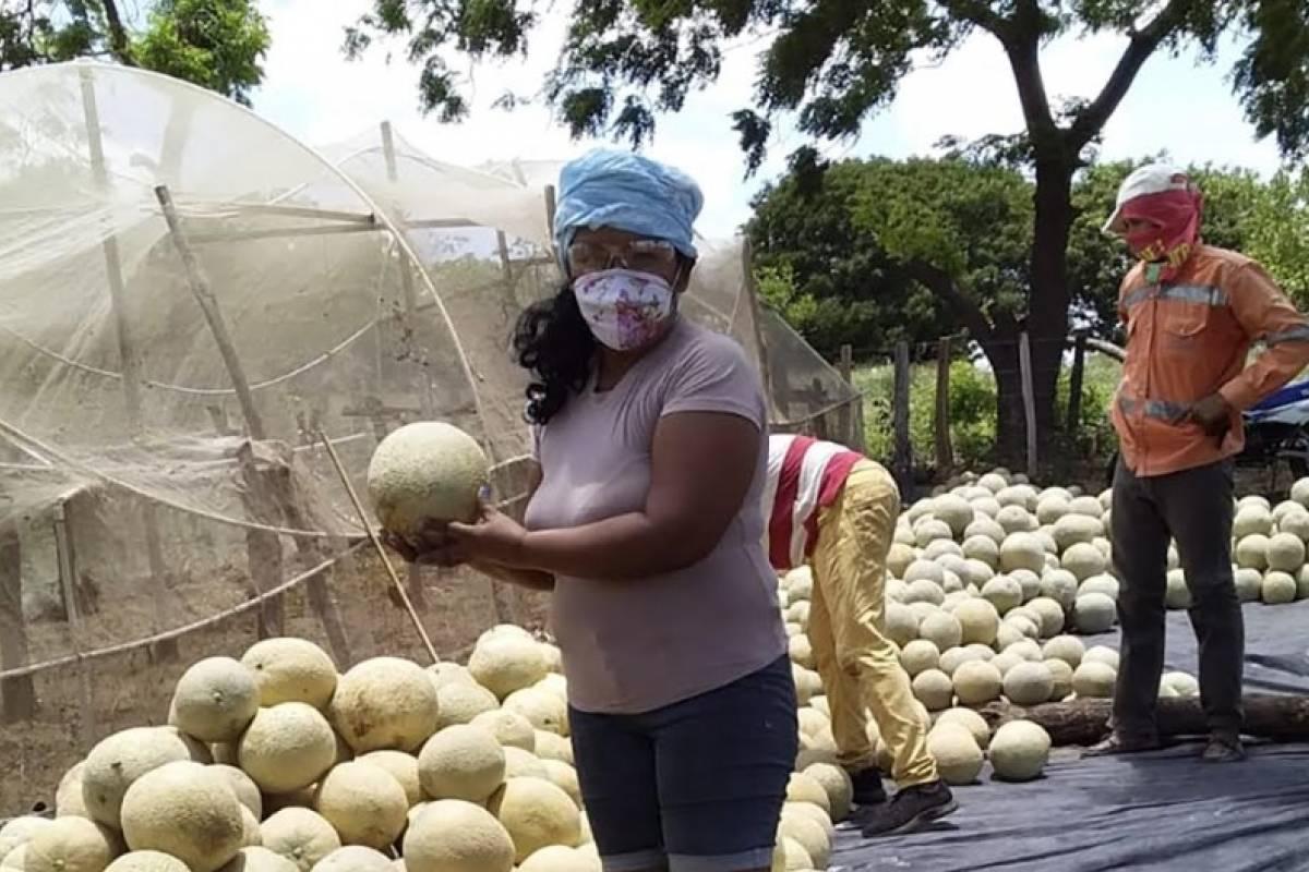 Si nacimos pa' semilla: Las mujeres que sembrando dejaron atras el conflicto armado