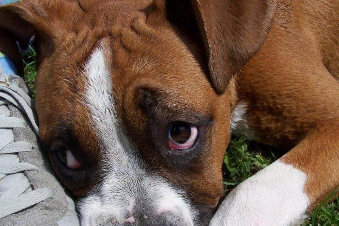 El motivo real por el que tu perro te da la pata