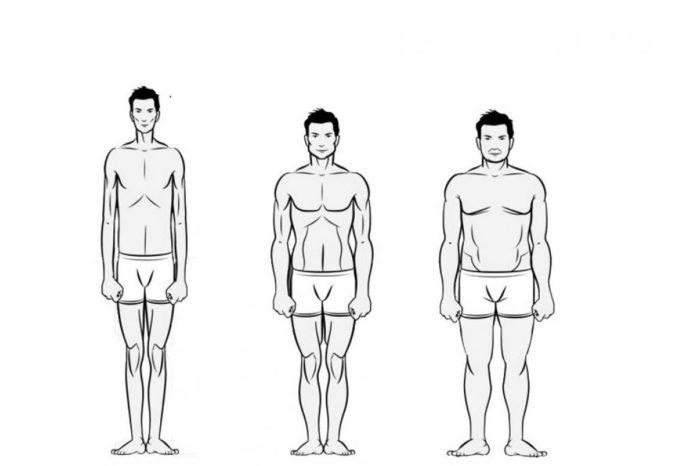 ¿Eres ectomorfo, mesomorfo o endomorfo? Que son los somatotipos y que dicen de nosotros