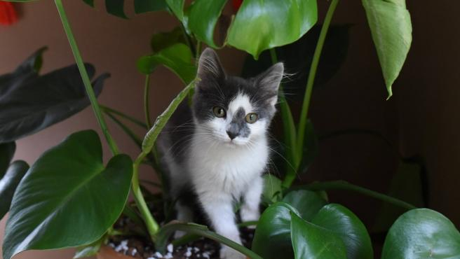 Tu gato te habla con la cola: ¿cual es el significado de sus movimientos?