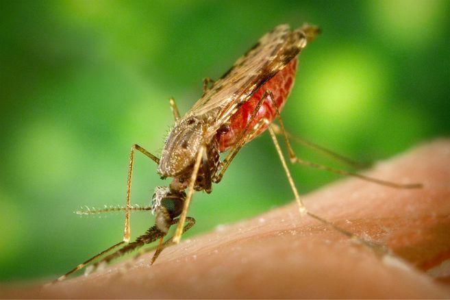 Quibdo (Choco), premiado internacionalmente por su lucha contra la malaria