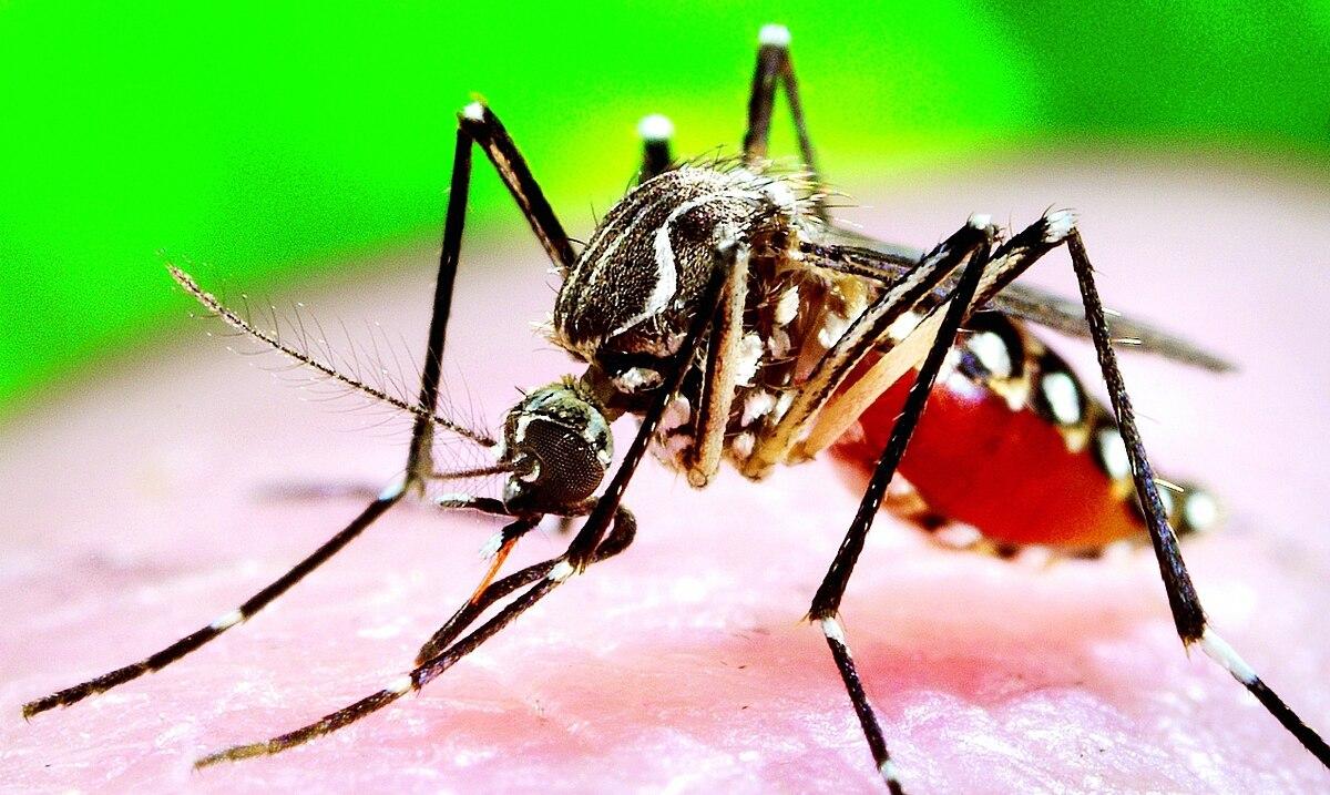 Preocupa el junte de dengue, COVID-19 e influenza