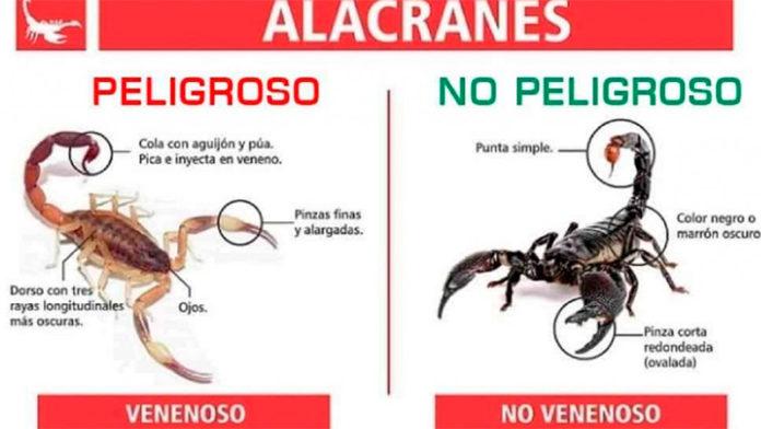 Recomendaciones para evitar accidentes dolorosos con alacranes, arañas y otras alimañas en el período estival