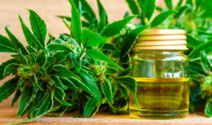 Advierten que todavia quedan grises para la reglamentacion de la ley que permite el cultivo de cannabis medicinal