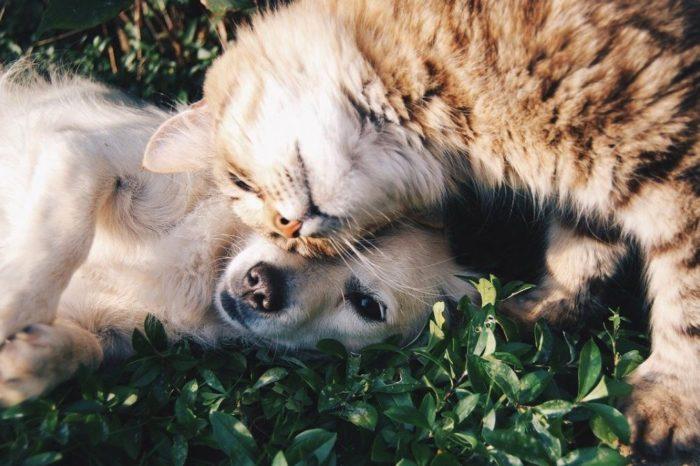 ¿Como conseguir que la presentacion entre un perro y un gato sea optima?