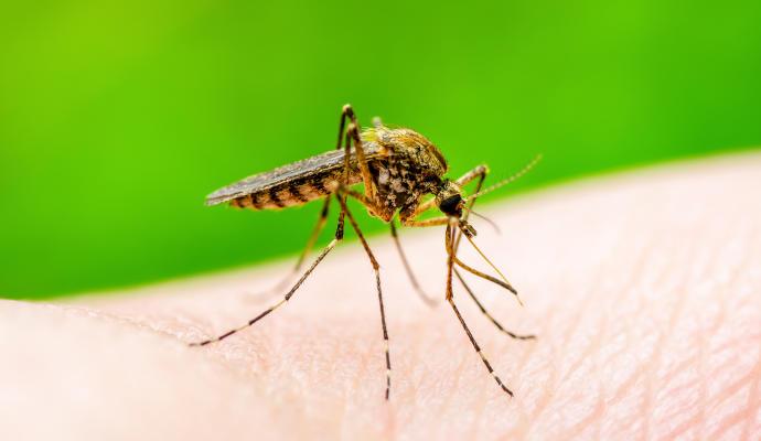 Descubren cómo causa la microcefalia el virus del Zika