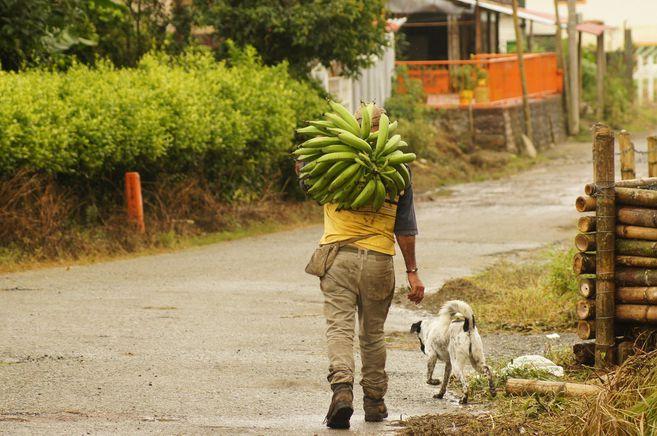 Inseguridad alimentaria: otra cara de la pandemia golpea a la region