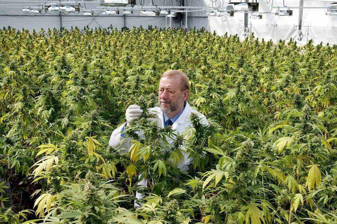 La ONU reconoce las propiedades medicinales del cannabis y la retira de categoria de drogas mas peligrosas