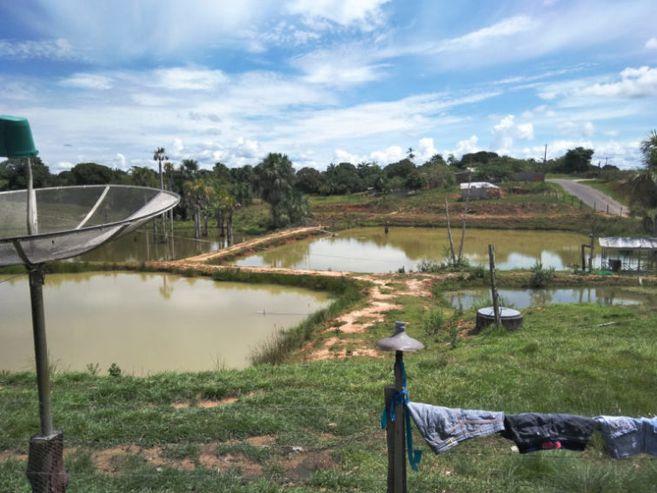La malaria se abre paso en las ciudades amazonicas