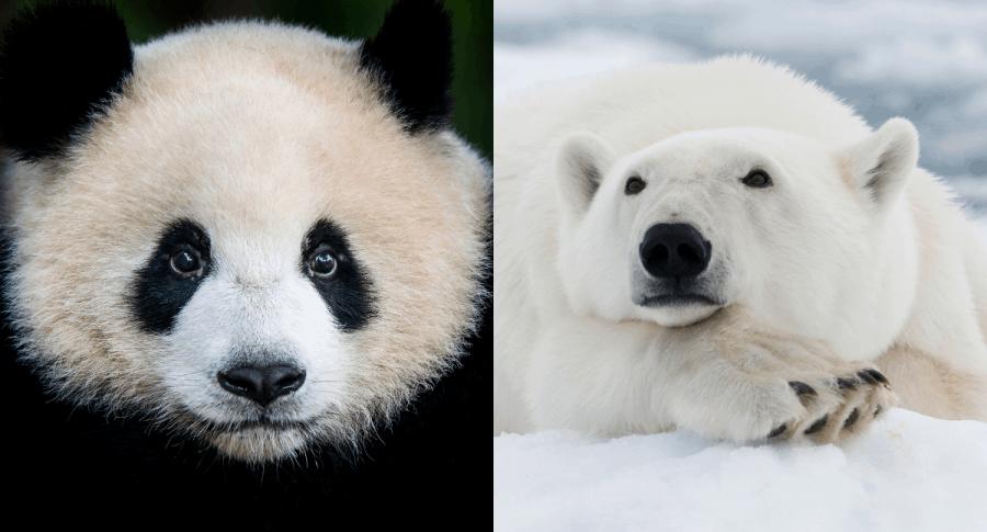 ¿Que animales, en Colombia y en el mundo, estan en peligro de extincion en 2020?