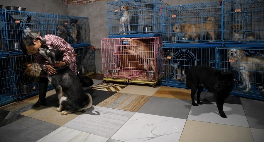 Una mujer jubilada comparte su casa con 1.300 perros