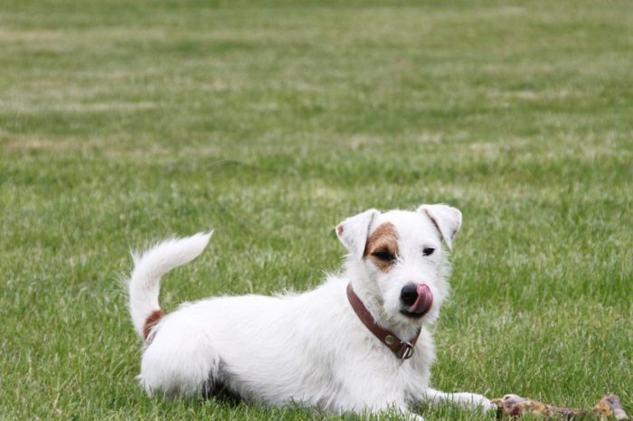 ¿Que es la dieta BARF para perros? ¿Puede suponer algun riesgo para la salud de nuestras mascotas?