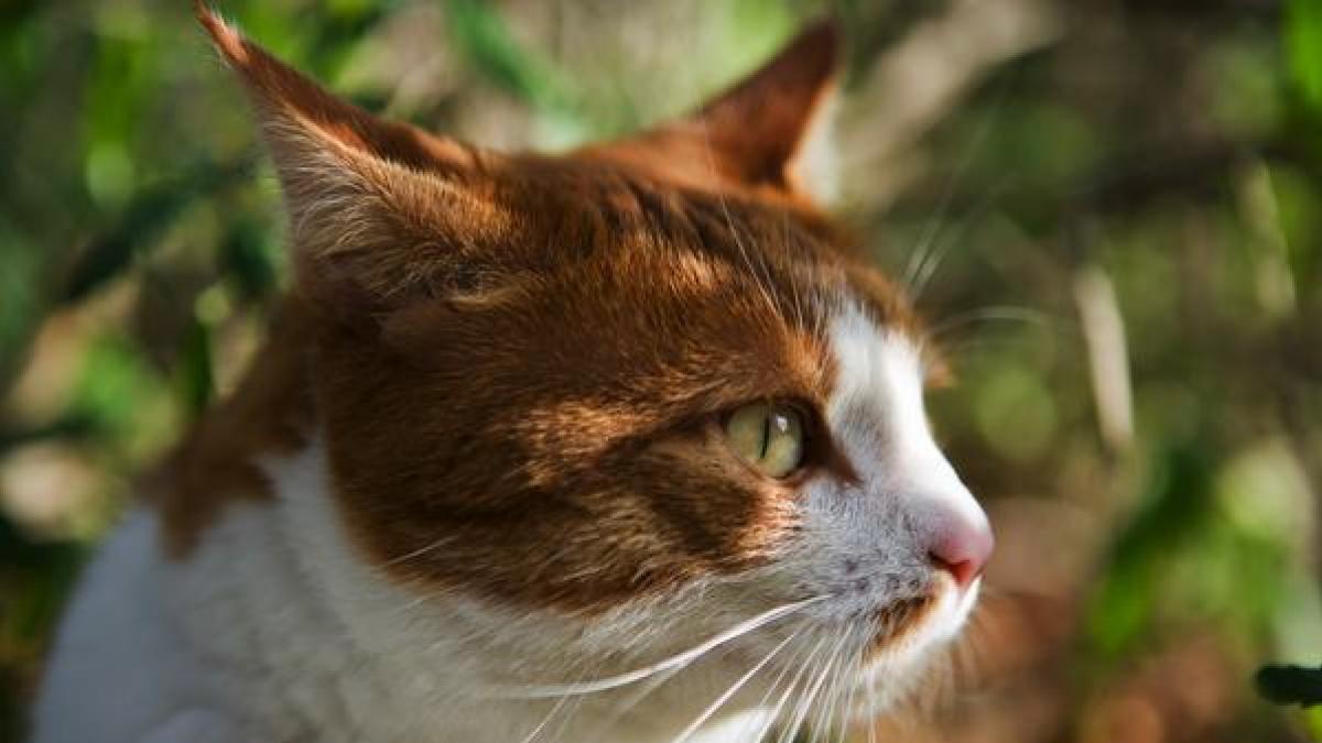 Perdida de gusto, artrosis, enfermedades renales... ¿Como y cuando manifiestan los gatos los primeros signos de vejez?