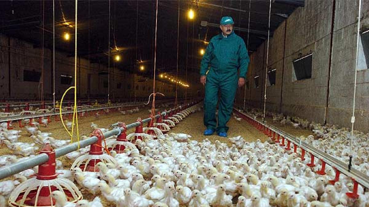 """La OMS analiza el primer caso de gripe aviar H5N8 detectado: """"El riesgo de contagio entre humanos es bajo"""""""