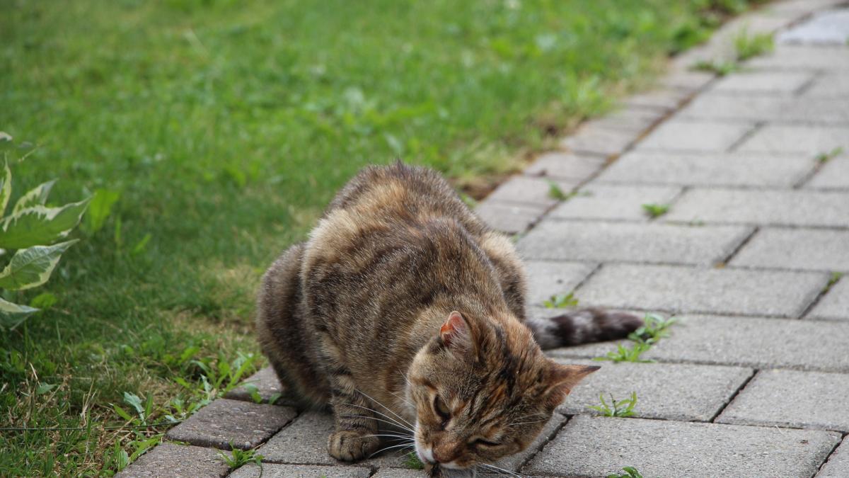 La forma sencilla de hacer que tu gato cace menos animales salvajes