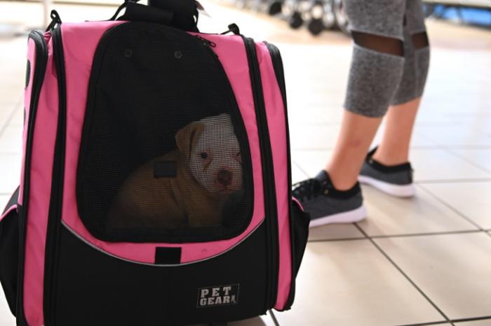 """""""Con todas las precauciones, no hay ningun problema para viajar con mascotas"""": Mark Lee"""