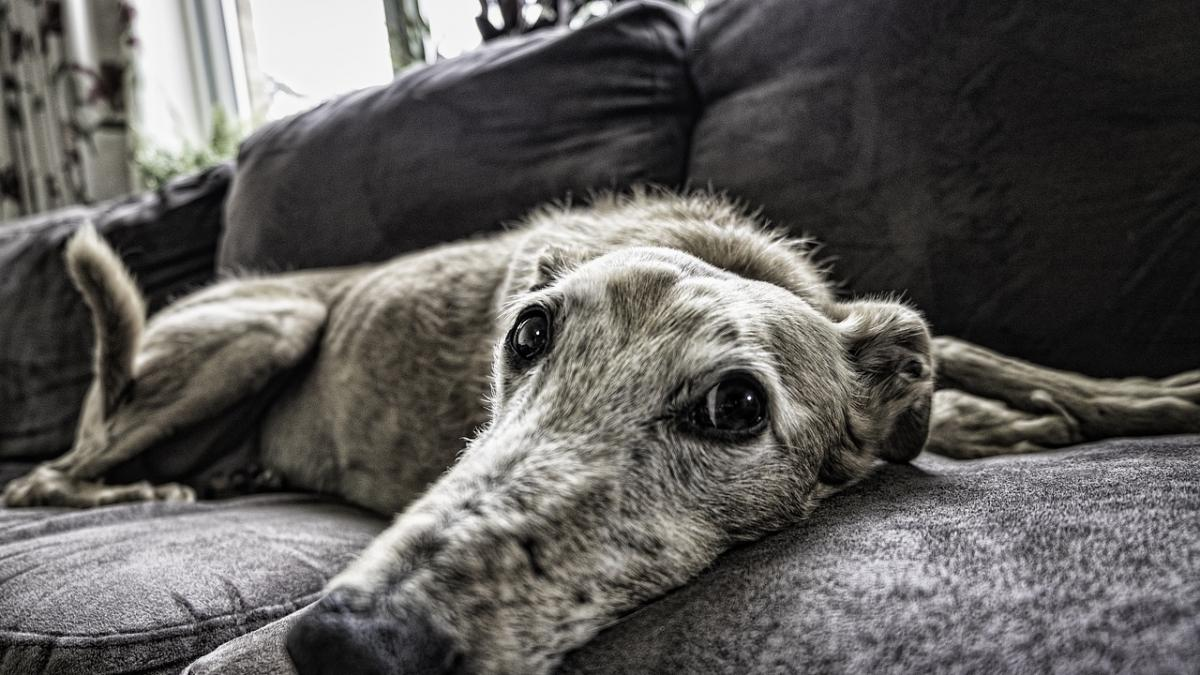 La odisea de buscar vivienda en alquiler teniendo perros o gatos: consejos para arrendatarios y arrendadores