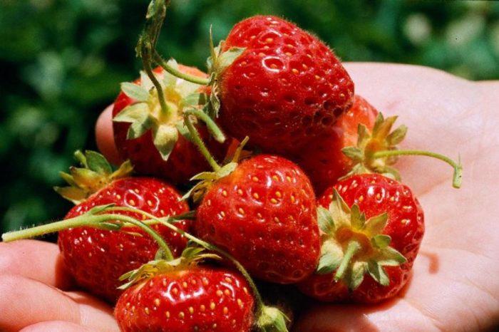 Las propiedades de las fresas: beneficios para la salud