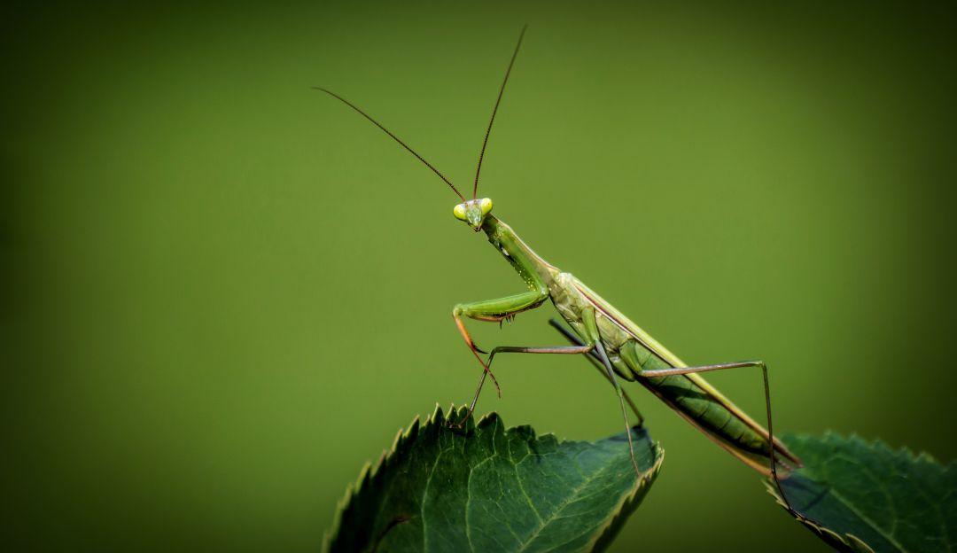 ¿Seran los insectos la comida del futuro?