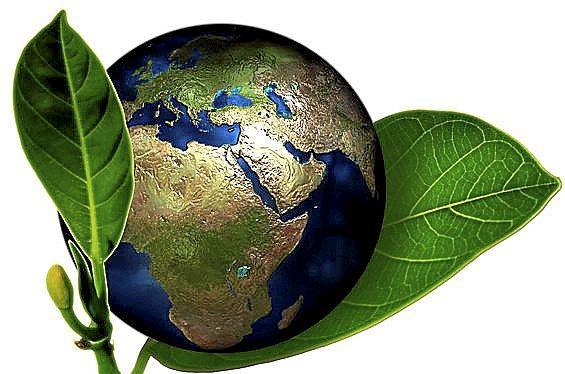 Alimentos bio: ¿merece la pena pagar mas por los productos ecologicos?