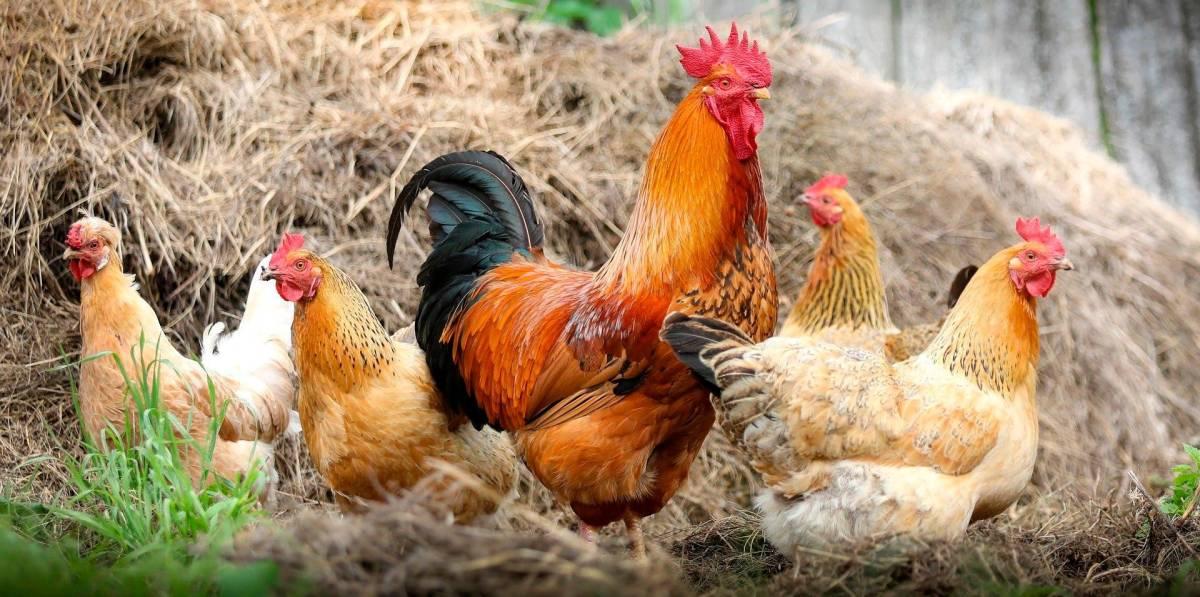 Primer caso de gripe aviar H5N8 en un ser humano dentro de las fronteras rusas
