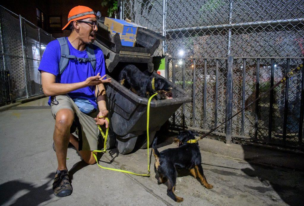 Crian perros para volverlos implacables cazadores de ratas en ciudad infestada de roedores