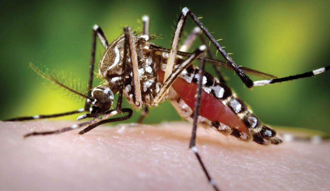 Solo falta aval del Invima para uso de vacuna contra el dengue en Colombia