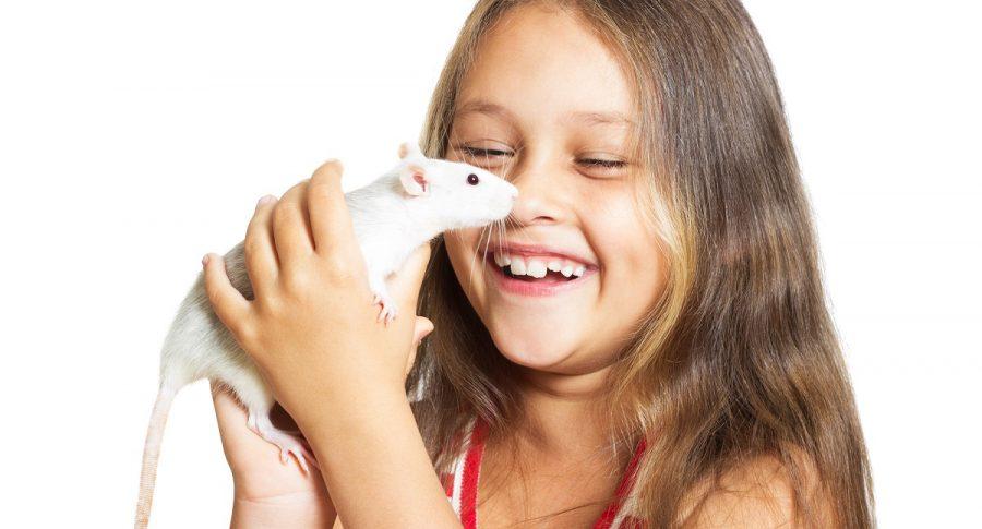 ¿Que significado tiene soñar con ratones? Pongales trampas, sobre todo si son grandes