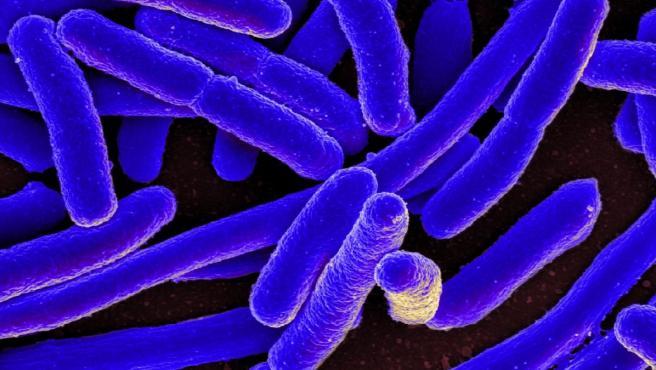 Inyectan por primera vez editores genéticos CRISPR en sangre de personas para curar una rara enfermedad