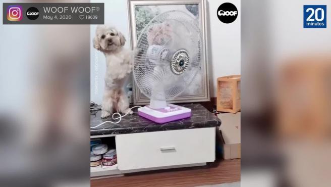 Este perro tiene muy claro como combatir el calor