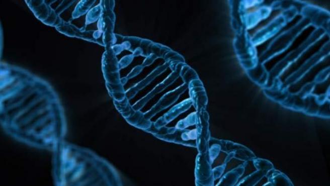 El ARN luego evoluciono para crear proteinas y enzimas. Con el tiempo, estas enzimas ayudaron al ARN a producir ADN, lo que llevo a organismos complejos.